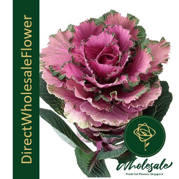 brassica rose crane purple